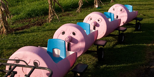 Pig Train Rides