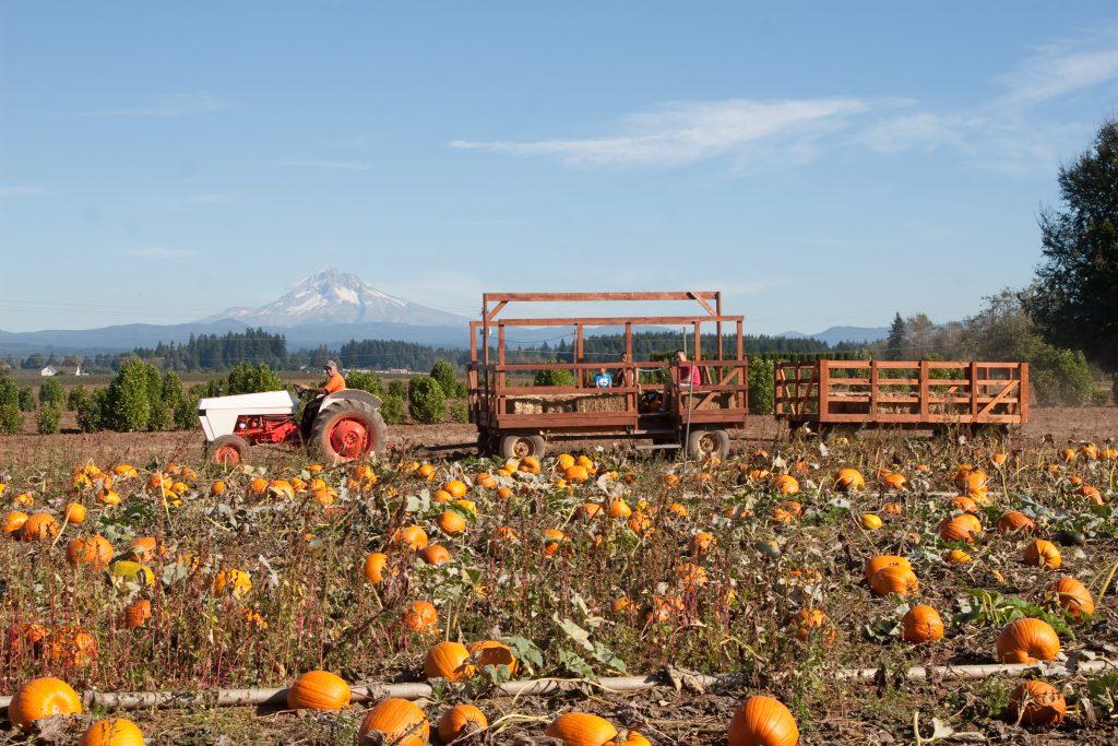 Hayride in pumpkin patch