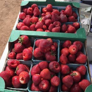 Strawberries in Crates