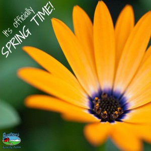 It's Officially Spring Time