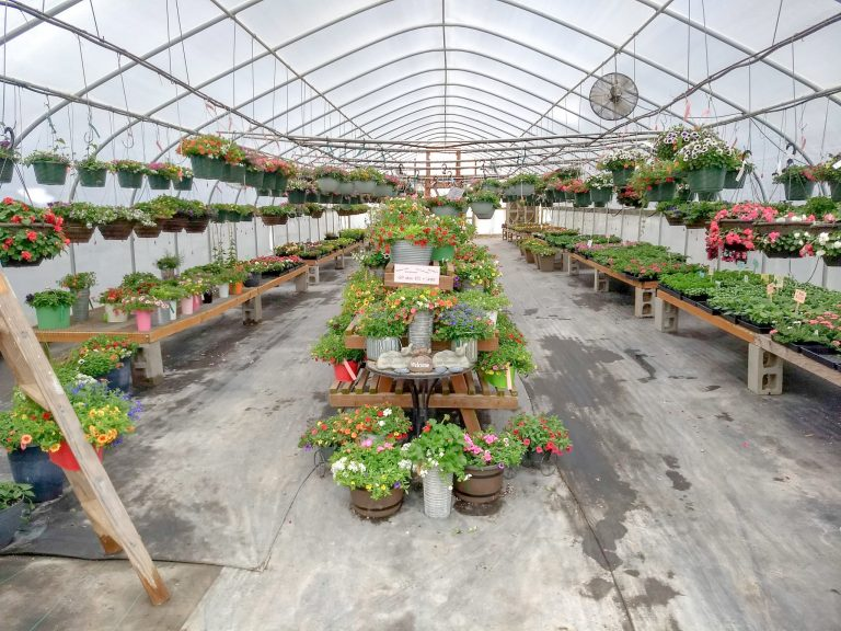 Everything you need to know about Bushue's Family Farm Greenhouses!